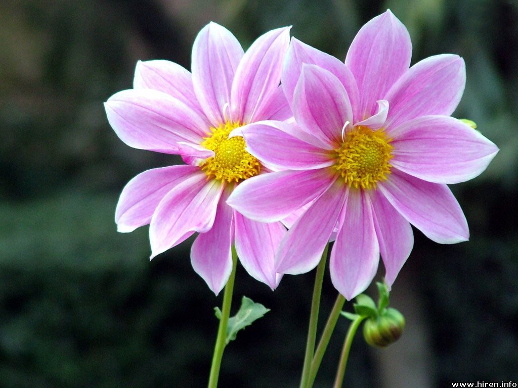 Your Personality according to your Birth Flower