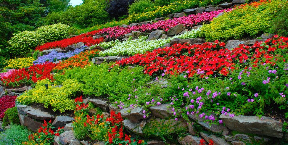 Starting a flower garden the landscape market for Small colourful garden ideas