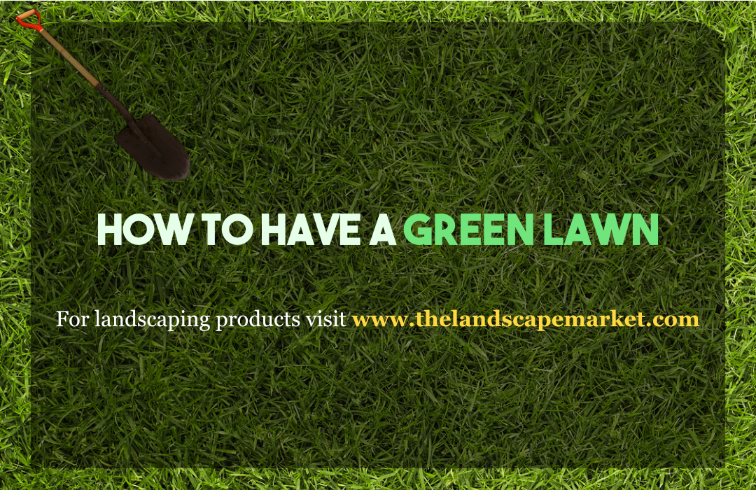 How To Have A Green Lawn The Landscape Market
